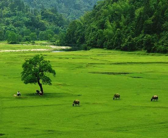Yangshuo Waterbuffalos